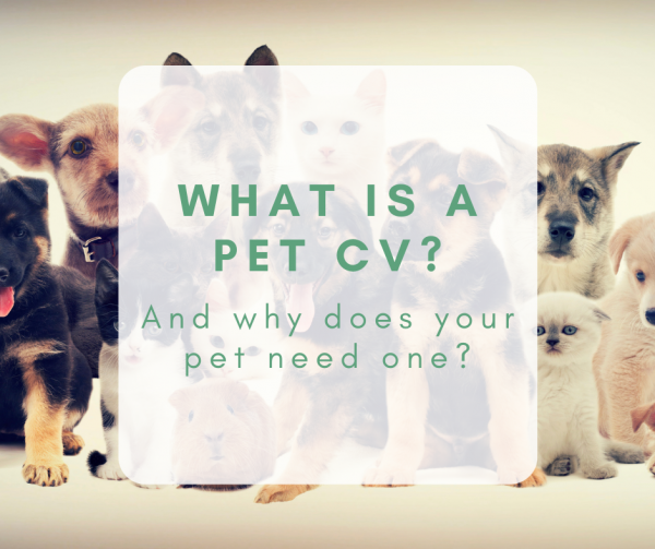 What is a Pet CV, and why does your pet need one?