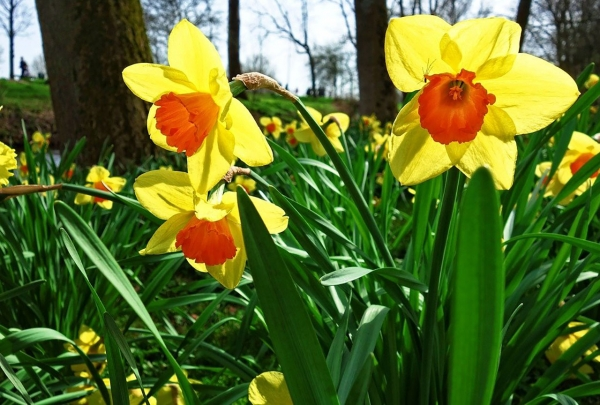 How to Secure the Snappy Sale of Your Home This Spring