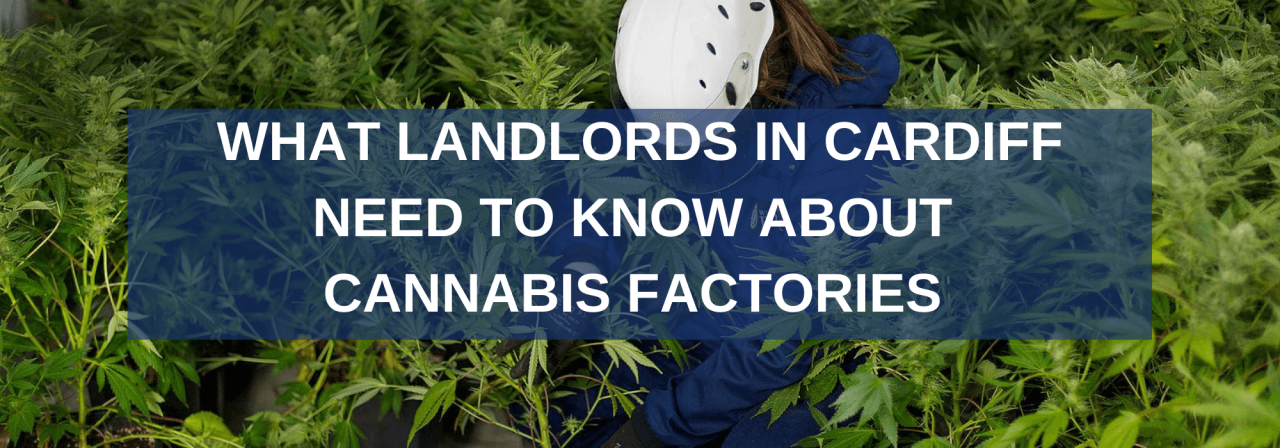 >What Landlords in Cardiff Need to Know About Canna