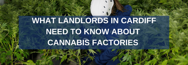 What Landlords in Cardiff Need to Know About Cannabis Factories