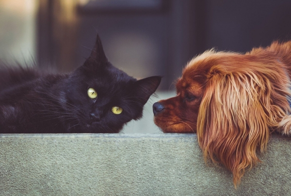 Advice for High Wycombe Landlords on Tenants with Pets