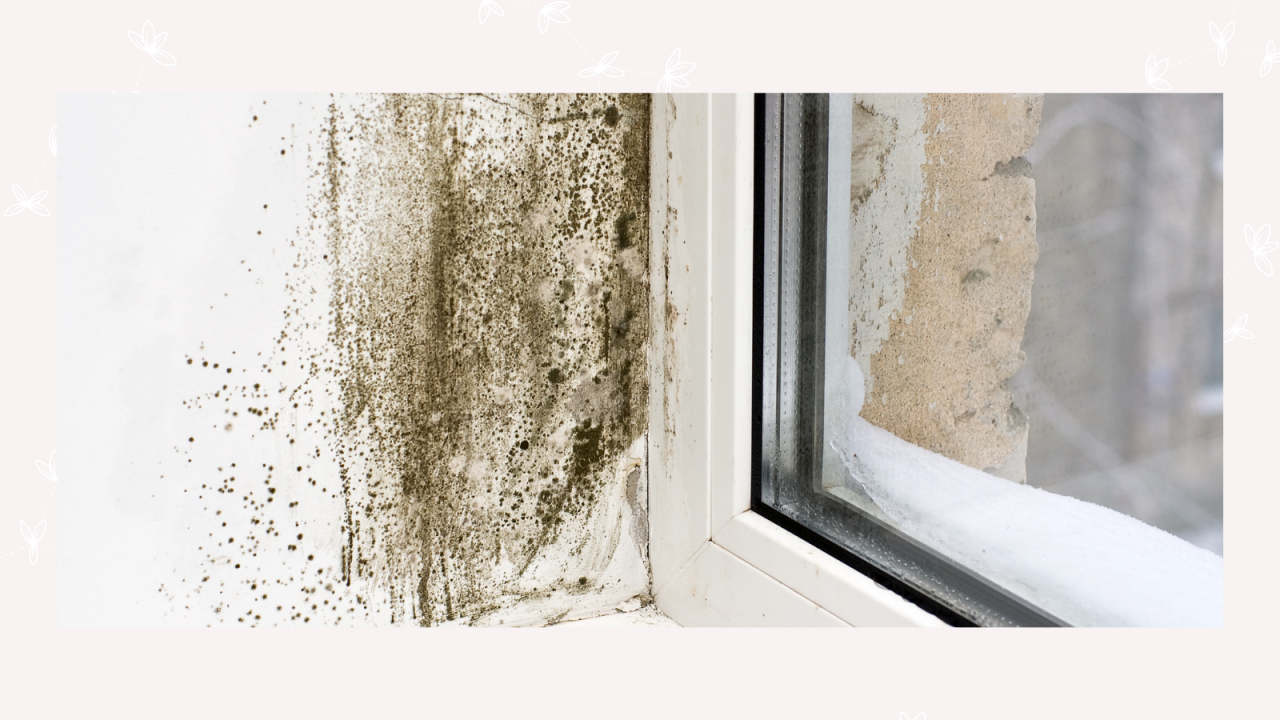 How to get rid of damp mould or condensation