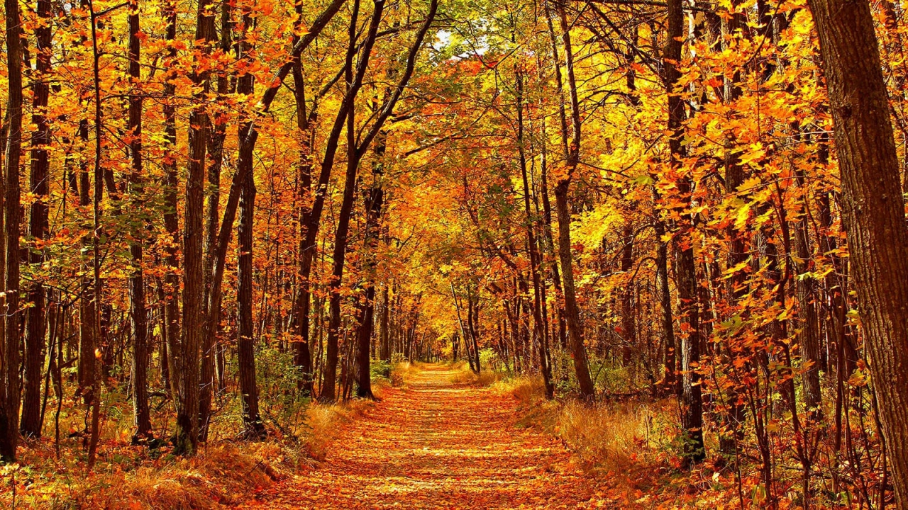 >Five Autumn Gardening Tips