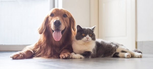 Pets in Rental Properties - Vets Join The Campaign