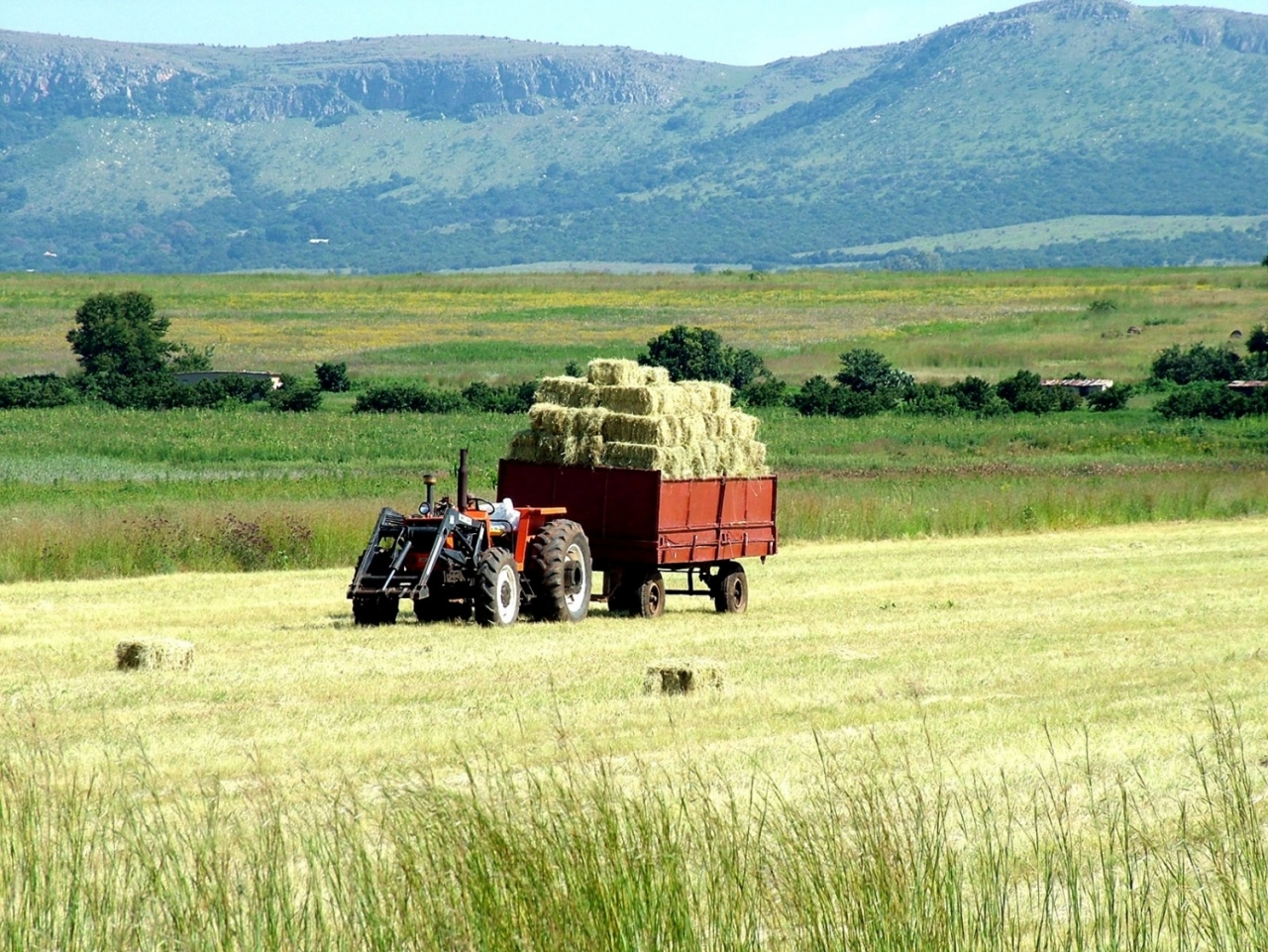 Pastures New - Agricultural Development