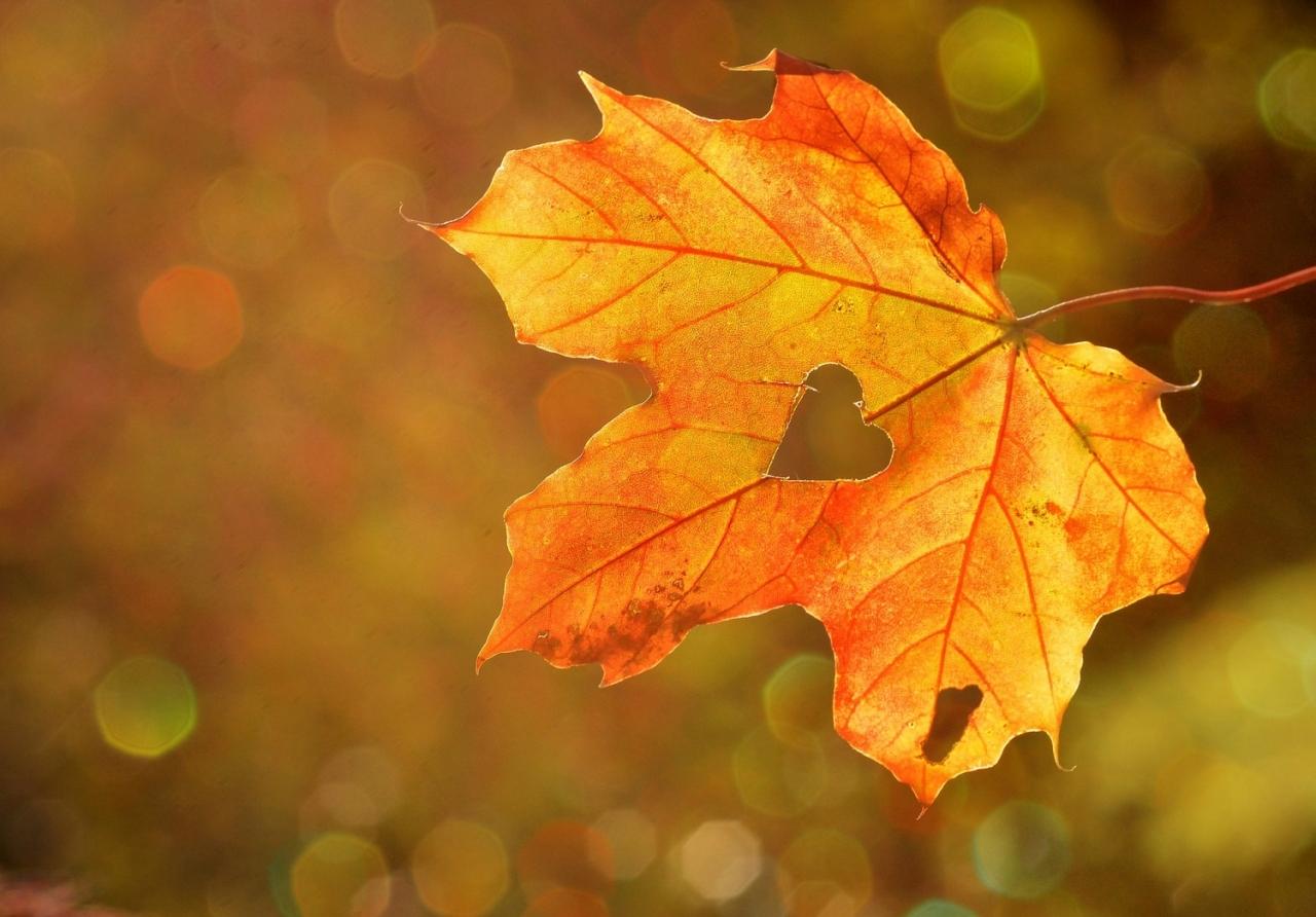 >Autumn leaves