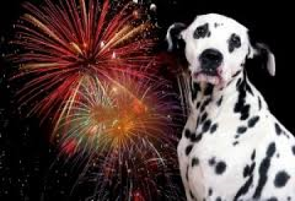 Five tips to keep your dogs and cats calm this fireworks season