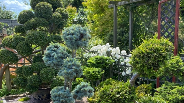 Gardens are good for you so why not visit a local one this weekend