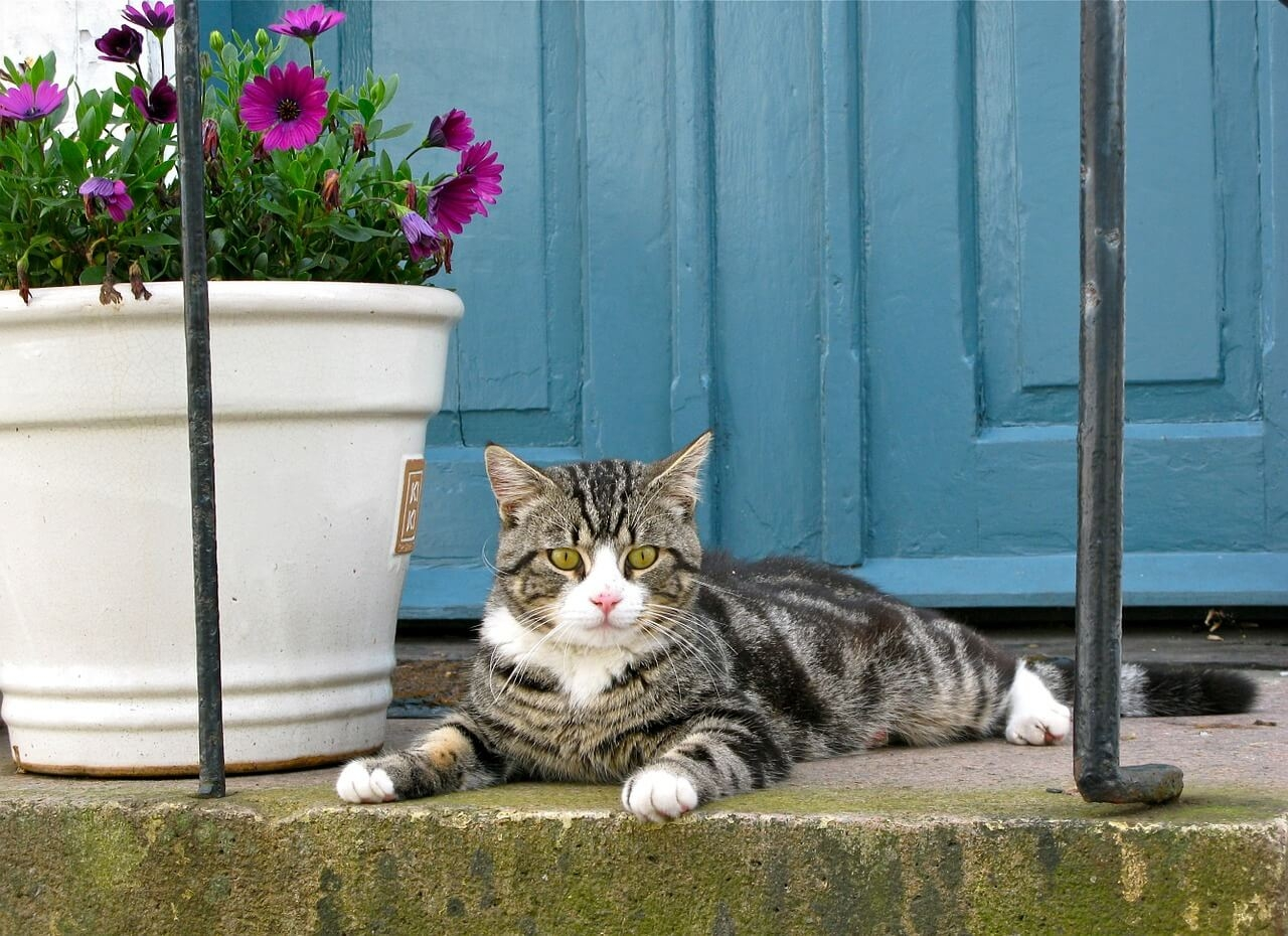 >What Can I Do To Boost My Properties Kerb Appeal?