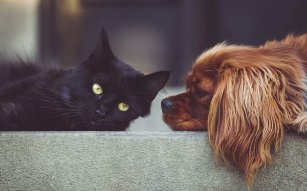 Should Landlords in Bromley and the South East Allow Tenants to Keep Pets?