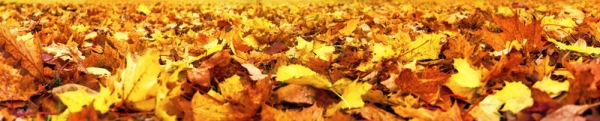 Lettings Autumn Update