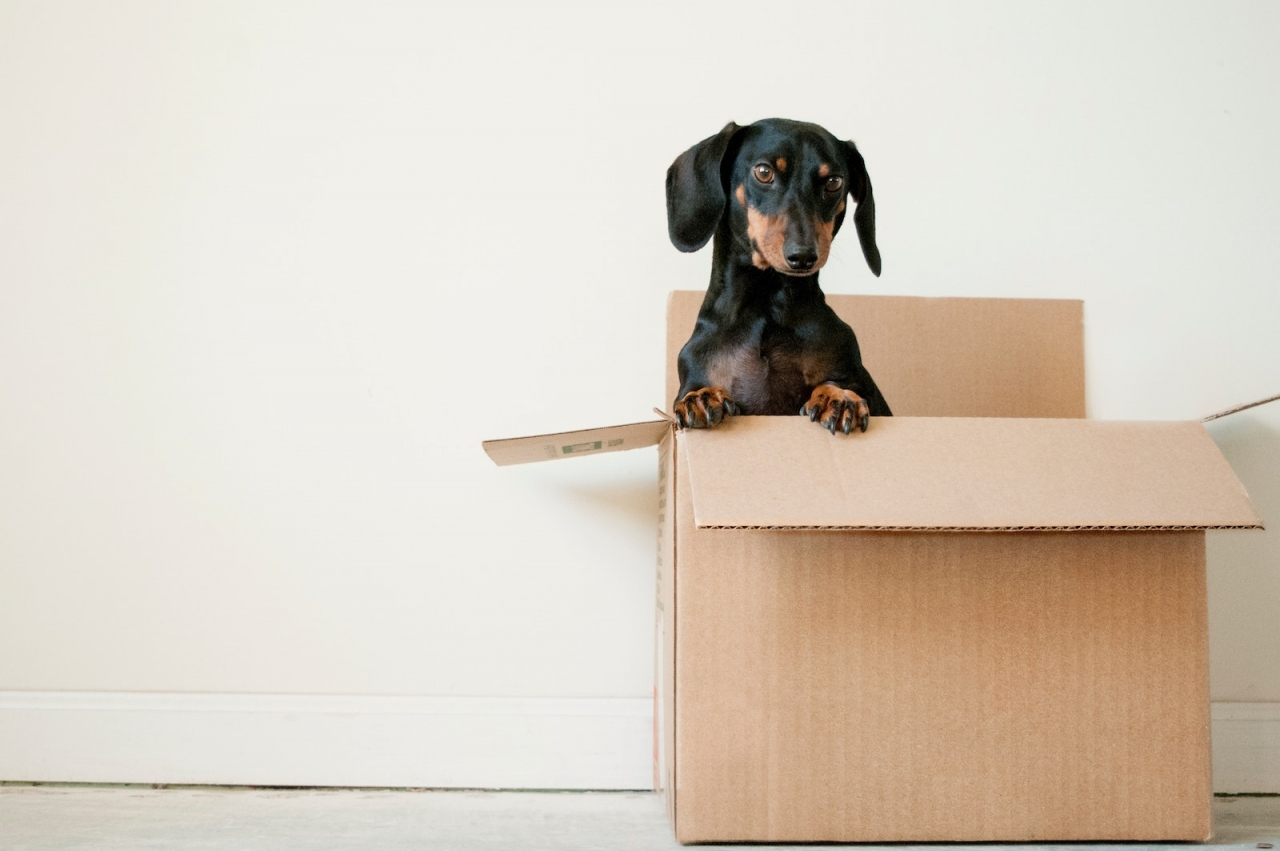 >Tips for moving