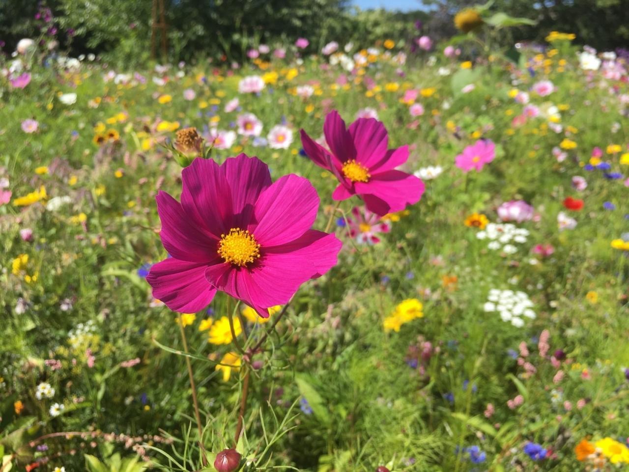 >July Gardening Tips