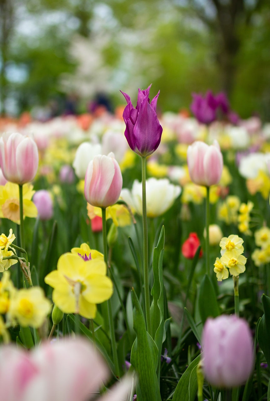 >Top Spring Selling Tips forSidcupHomeowners
