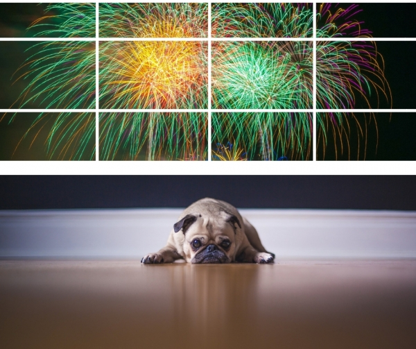 dog scared of fireworks