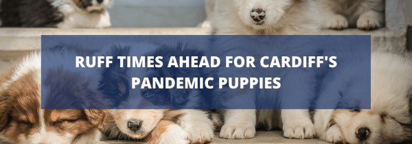 Ruff Times Ahead for Cardiff's Pandemic Puppies