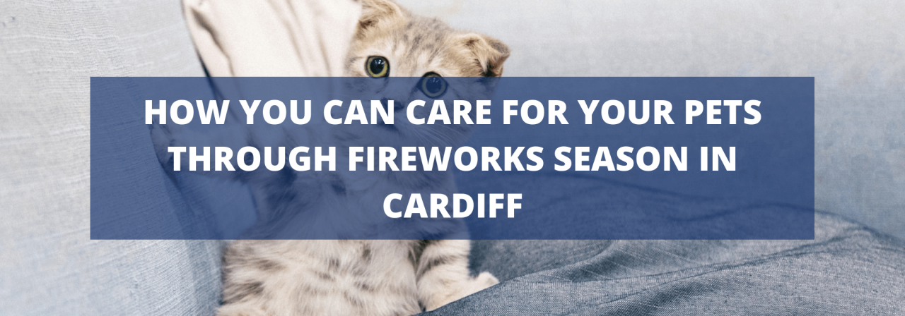 >How you can care for your pets through fireworks s
