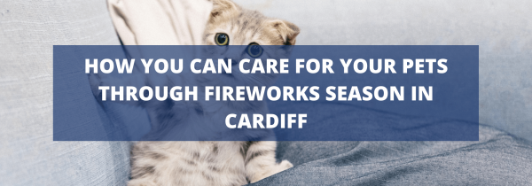 How you can care for your pets through fireworks season in Cardiff